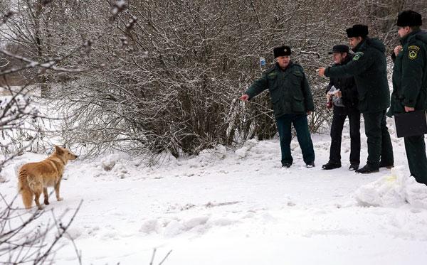 инспекторы оштрафовали бездомную собаку