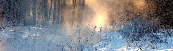 Зима в Косинском лесу